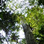 cuc phuong jungle