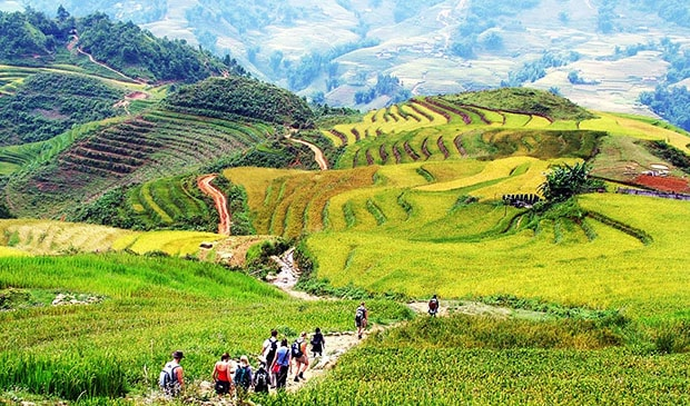 trekking Sapa in green