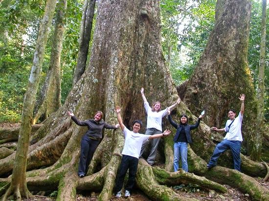 thousand years old tree in cuc phuong